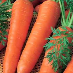 информация, описания, фото сортов моркови
