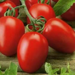 информация, описания, фото сортов помидоров