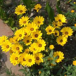 информация, описания, фото садовых цветов