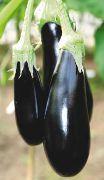 фото баклажан Марципан F1` гибрид, цвет , , семена