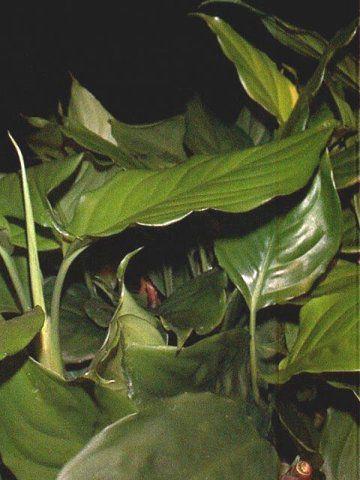 Комнатные растения старшая группа