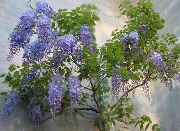 фото Глициния (Вистерия) лиана домашние комнатные цветы и растения