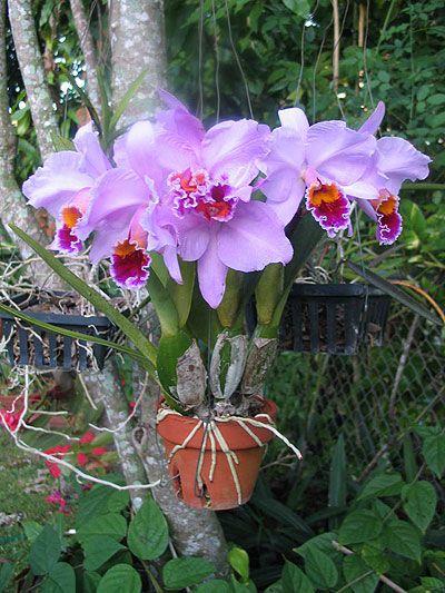 Комнатные растения фото и описание 13