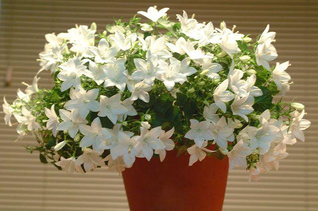 суккуленты комнатные растения фото