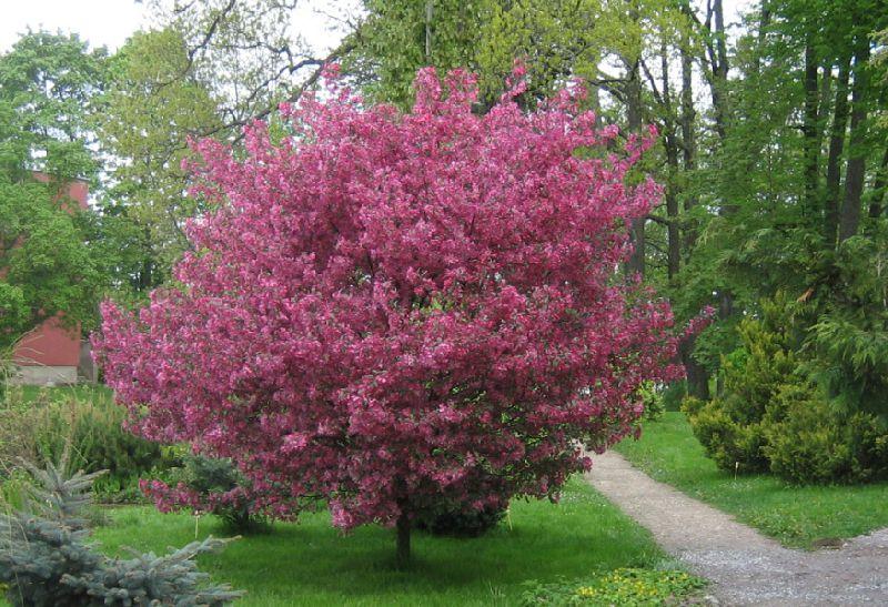 Деревья кустарники