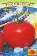 фото Ладушка F1 помидоры и томаты