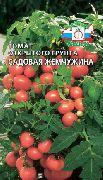фото Садовая жемчужина помидоры и томаты