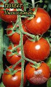 фото Уникальный помидоры и томаты