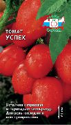 фото Успех помидоры и томаты