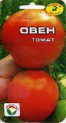 фото Овен помидоры и томаты