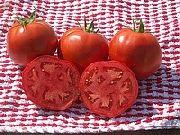 фото Лакота F1 помидоры и томаты