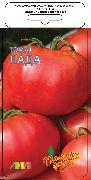 фото Лада F1 помидоры и томаты