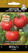 фото Огонь F1 помидоры и томаты