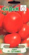 фото Огниво F1 помидоры и томаты