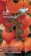 фото Услада F1 помидоры и томаты