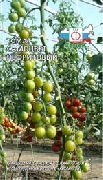 фото Самоцвет нефритовый помидоры и томаты