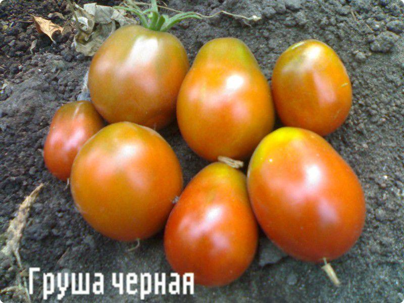 Фото томаты, помидоры Груша Черная сорт, цвет , , семена.