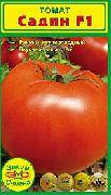 фото Садин F1  помидоры и томаты