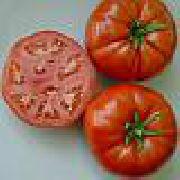 фото Лайф F1 помидоры и томаты