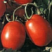 фото Уникум F1 помидоры и томаты