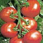 фото Сайт F1  помидоры и томаты