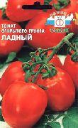 фото Ладный помидоры и томаты
