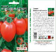 фото Огородный <a target=_top  href=/poisk/колдун><big>колдун</big></a> помидоры и томаты