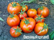 фото Оконный штамб помидоры и томаты