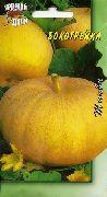 фото Бокогрейка тыква
