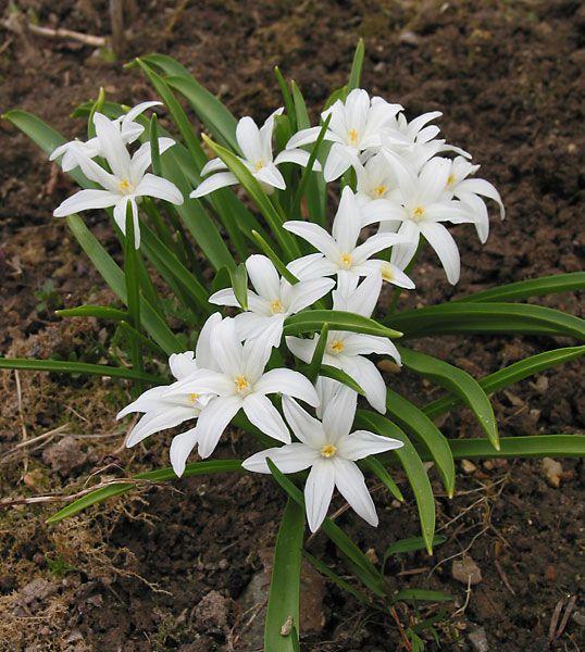 Записи цветы из кожи фото цветы